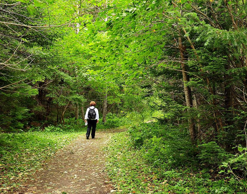 Domaine Annie-sur-mer - Accès piste de randonnée en forêt